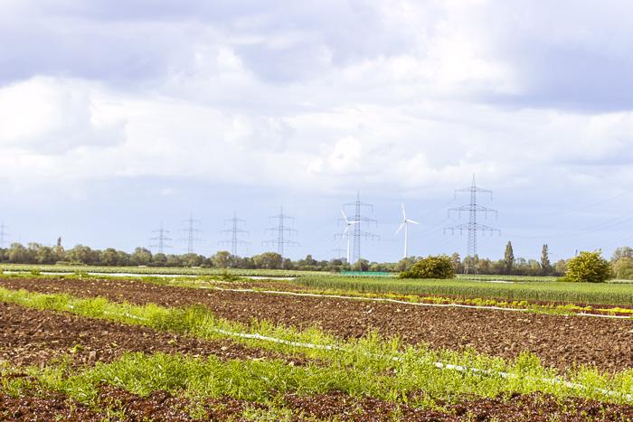 Strommasten Überlandleitungen Ludwigshafen Pfalz, Feld mit Salatanbau