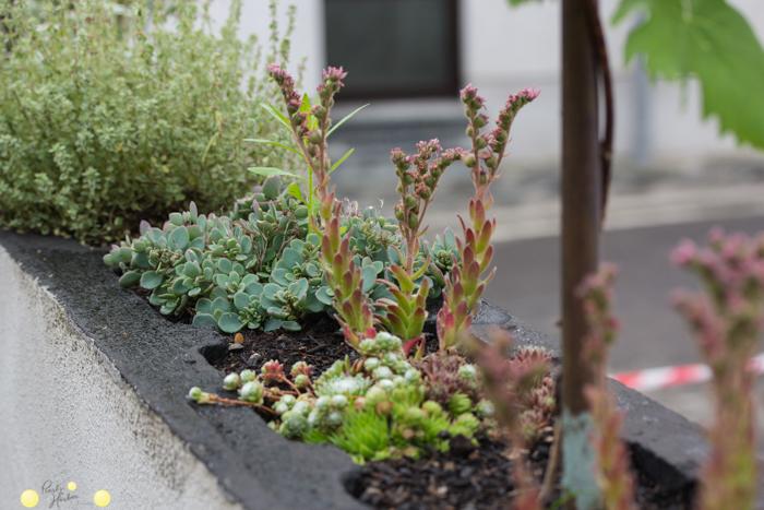 Mauer begrünen. So legt man einen kleinen Garten an. Blumen in der Mauer