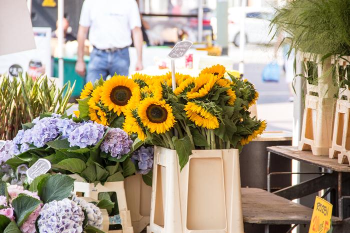 Sonnenblumen auf dem Grote Markt in Den Haag