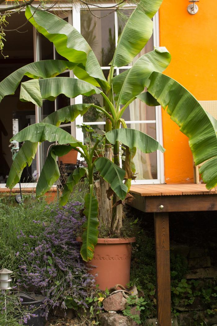 Platz ist im kleinsten Garten {12 von 12 im Juli}