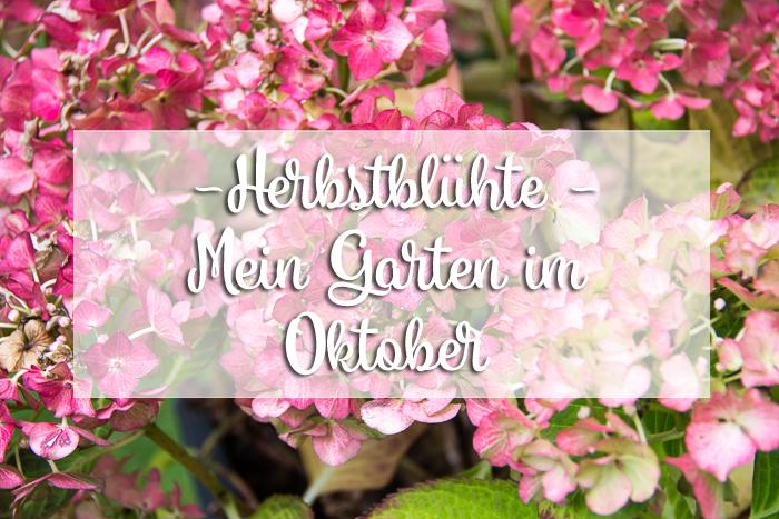 Mein Garten im Oktober