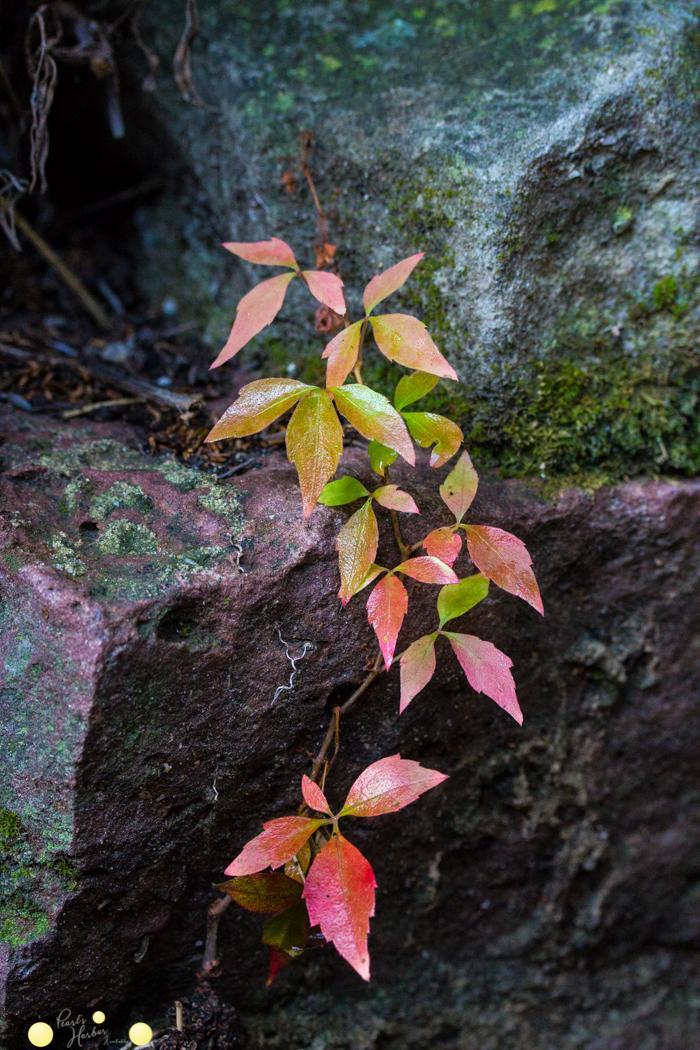 Herbst Oktober in meinem Garten