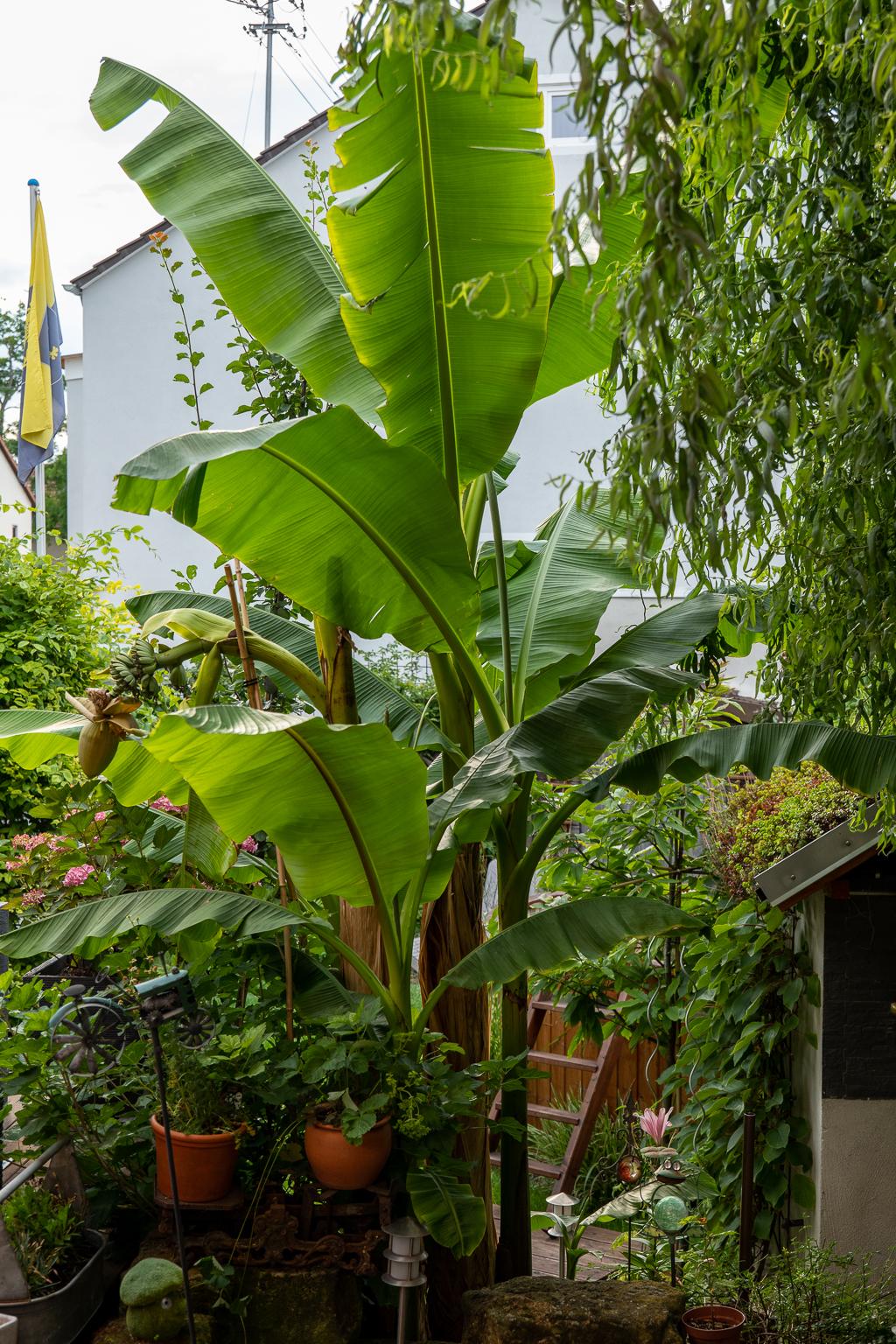 Urwald im Garten